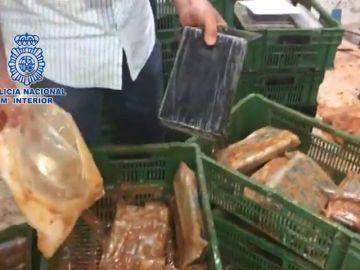 Incautan más de media tonelada de cocaína escondida dentro de bloques de comida congelada
