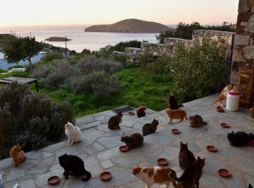 La oferta de empleo en una paradisiaca isla de Grecia