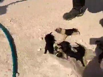 Tres bomberos rescatan a cinco cachorros que fueron tirados a un pozo