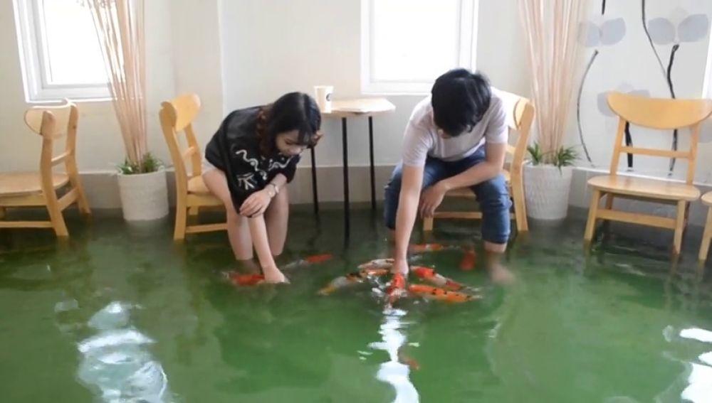Una cafetería en Vietnam mezcla la pasión por el café y la pasión por los peces