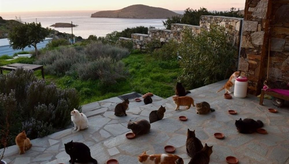 Cuidar de gatos en una isla griega