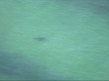 Un hombre de 61 años en estado grave tras ser atacado por un tiburón