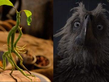 'Animales Fantásticos: Loc Crímenes de Grindelwald'