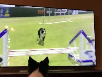 La divertida reacción de una perra al verse concursando en televisión
