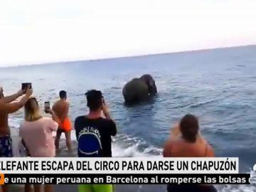 Encuentran a un elefante bañándose en la playa de Calabria, Italia
