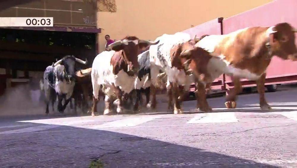 Los toros de la Ganadería de Guadalest protagonizan un peligroso y rápido tercer encierro en San Sebastián de los Reyes