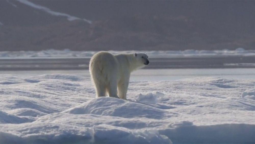Los expertos avisan de que la Tierra podría alcanzar un 'punto de no retorno' para 2035 si no se frena el cambio climático
