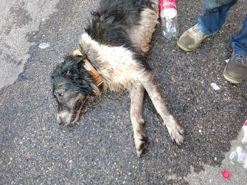 Perro asistido por un golpe de calor en Fuenlabrada