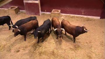"""Alberto López Simón, torero, cuenta: """"en un encierro uno tira de instinto, no hay tiempo para pensar"""