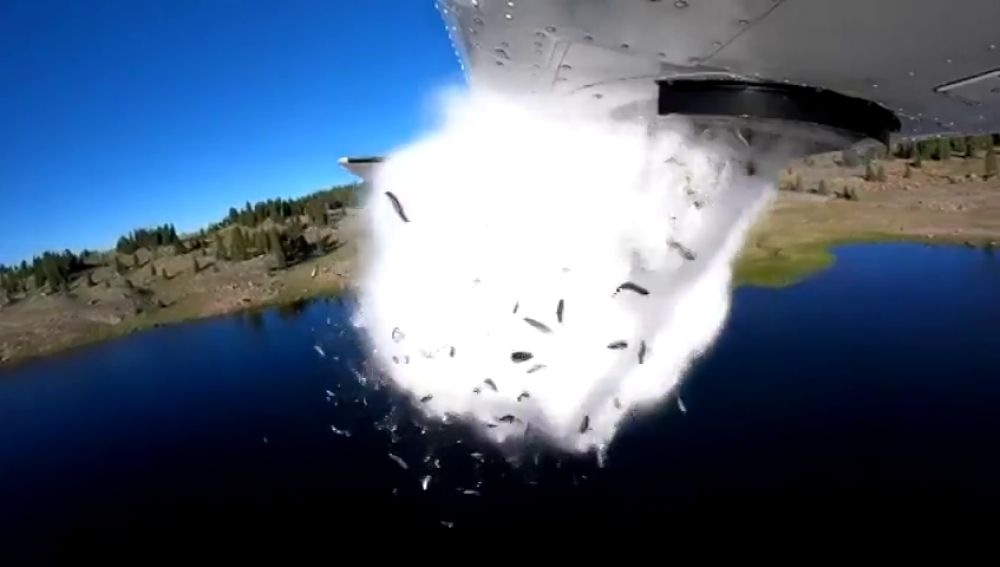 Hipnótico vídeo de una 'lluvia' de peces en un lago de Utah