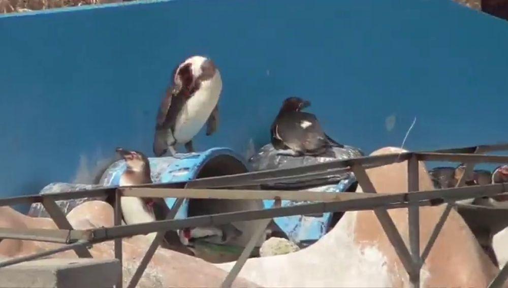 Denuncian el abandono de un delfín y decenas de pingüinos en un acuario japonés abandonado