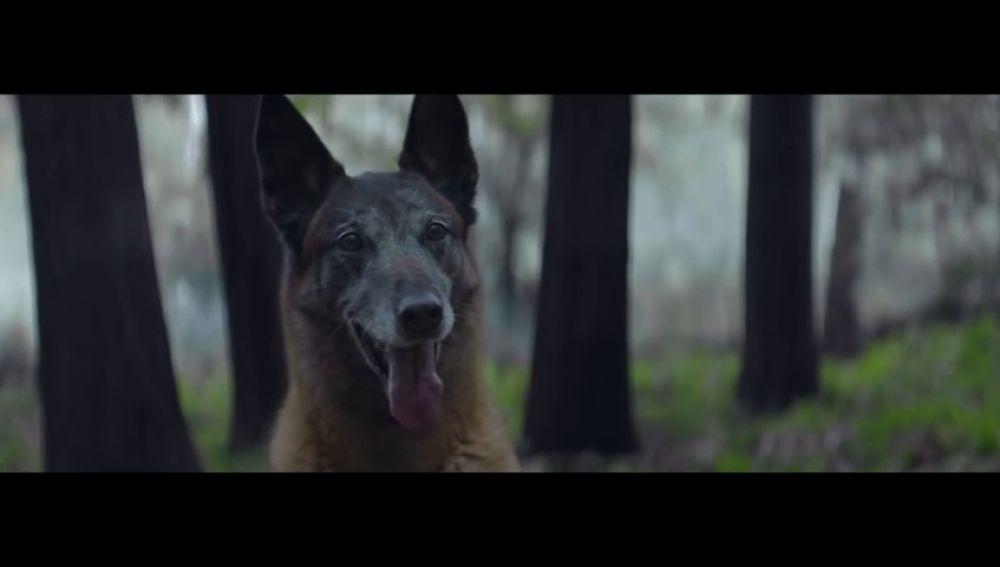 Detienen a un hombre por abandonar a un perro en un área de servicio de la A-4