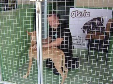 Un activista en contra del abandono animal se encierra en la jaula de una perrera en Alicante