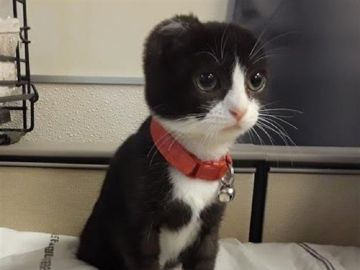 Karma, el gato sin orejas