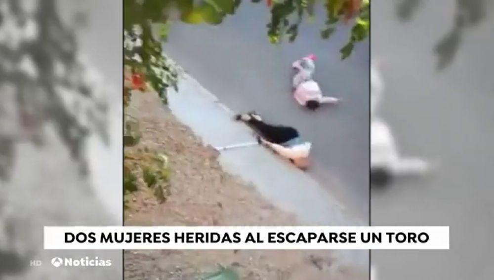 Un toro se escapa del encierro de Arcas y es abatido tras herir a dos personas