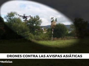 Drones con misiles para acabar con las avispas velutinas