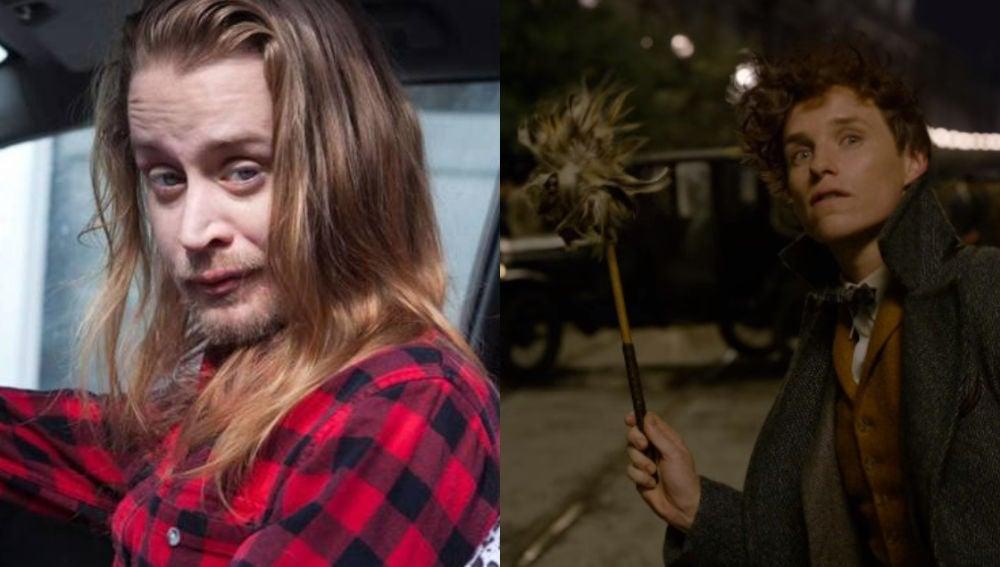 Macaulay Culkin quiere salir en 'Animales Fantásticos'