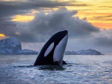 Un grupo de orcas da un susto a los tripulantes de un barco que vieron como golpeaban la embarcación