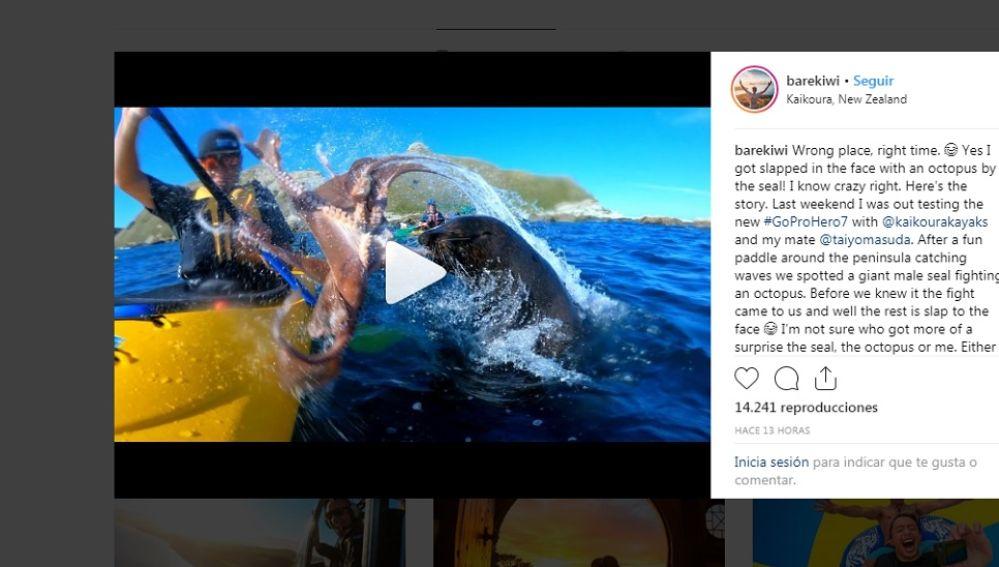 Momento en que una foca ataca a un kayakista con un pulpo