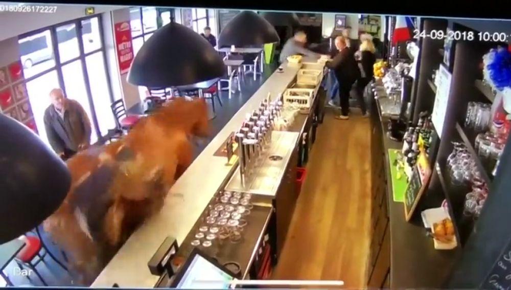 Escenas de pánico en un bar francés tras entrar a galope un caballo descontrolado