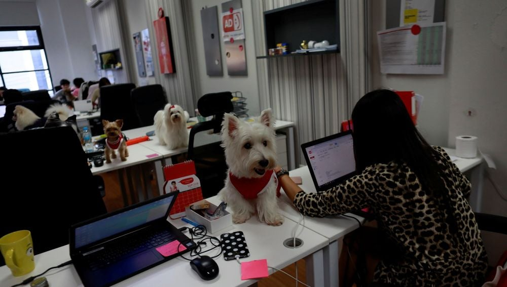 Perros en la oficina