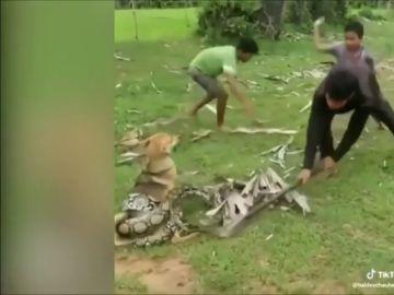 Unos niños salvan a su perro de morir asfixiado por una serpiente