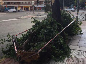 Árbol caído en San Sebastián de los Reyes (Madrid)