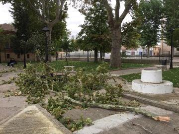 Árboles caídos en Fuentesauco (Zamora)