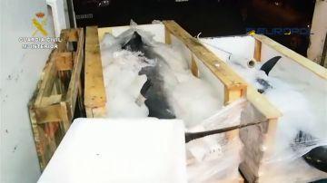 La Guardia Civil desmantela un grupo relacionado con el comercio ilegal de atún rojo