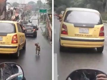 Perro persiguiendo a un taxi