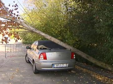 Un coche lleva más de dos meses inmovilizado por un árbol