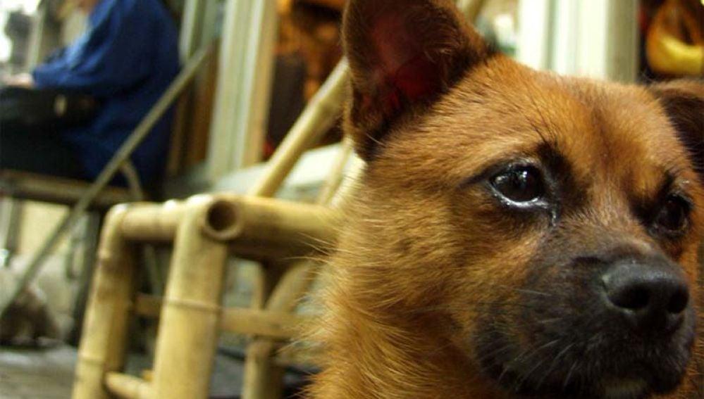 Foto de archivo de un perro en China