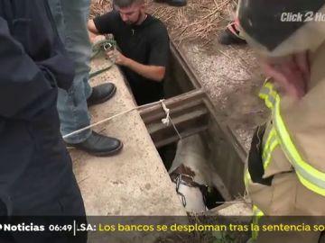 Rescatan a un poni tras quedarse atrapado en una alcantarilla ampliando el agujero del desagüe