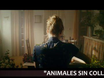 'Petra', 'Animales sin collar' o 'La buena esposa', entre los estrenos destacados del fin de semana