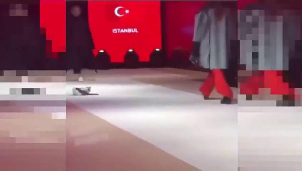 Un gato se cuela en un desfile de moda y se hace viral
