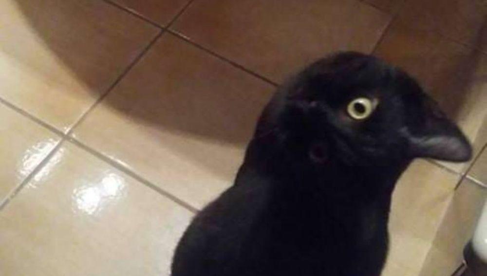 ¿Gato o cuervo?