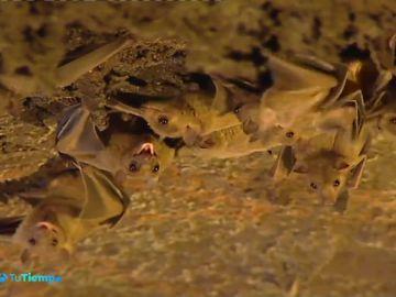 Los murciélagos son los mejores insecticidadas naturales