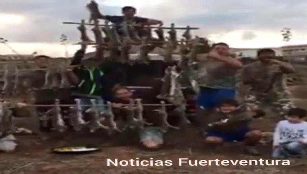 Unos cazadores de Fuerteventura exhiben 52 conejos muertos