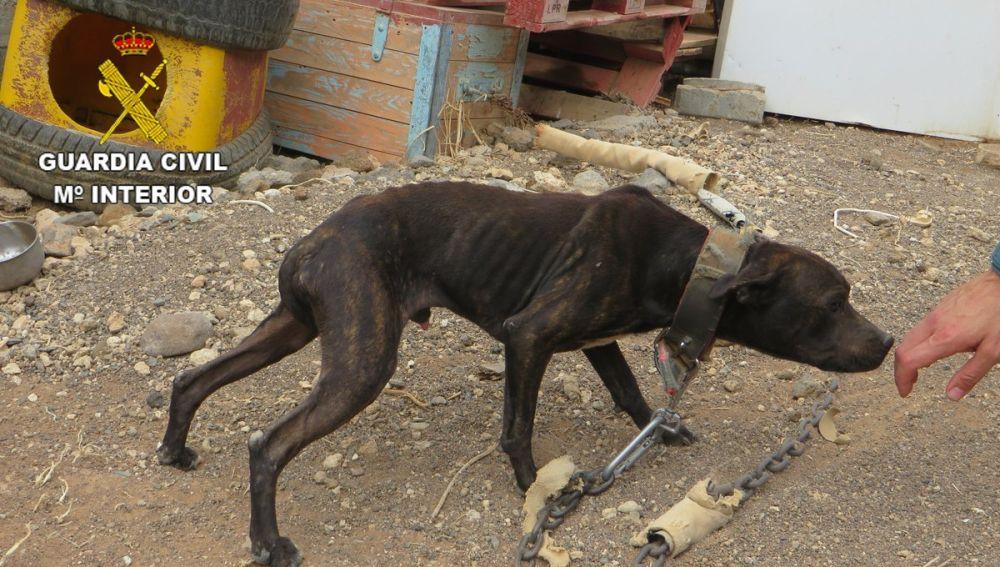 Uno de los perros rescatados en Gran Canaria