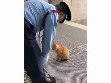 Unos gatos intentan durante dos años entrar a un museo en Japón