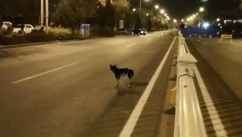Perro espera a su dueña en Hohhot