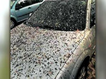 """Vecinos de un barrio de Tarragona denuncian una avalancha de pájaros en el barrio: """"Cada día hay que lavar el coche"""""""