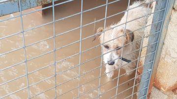Uno de los perros del refugio