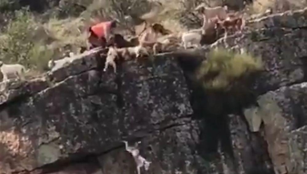 Fotograma del vídeo en que se observa como varios perros caen al vacío intentando cazar un ciervo