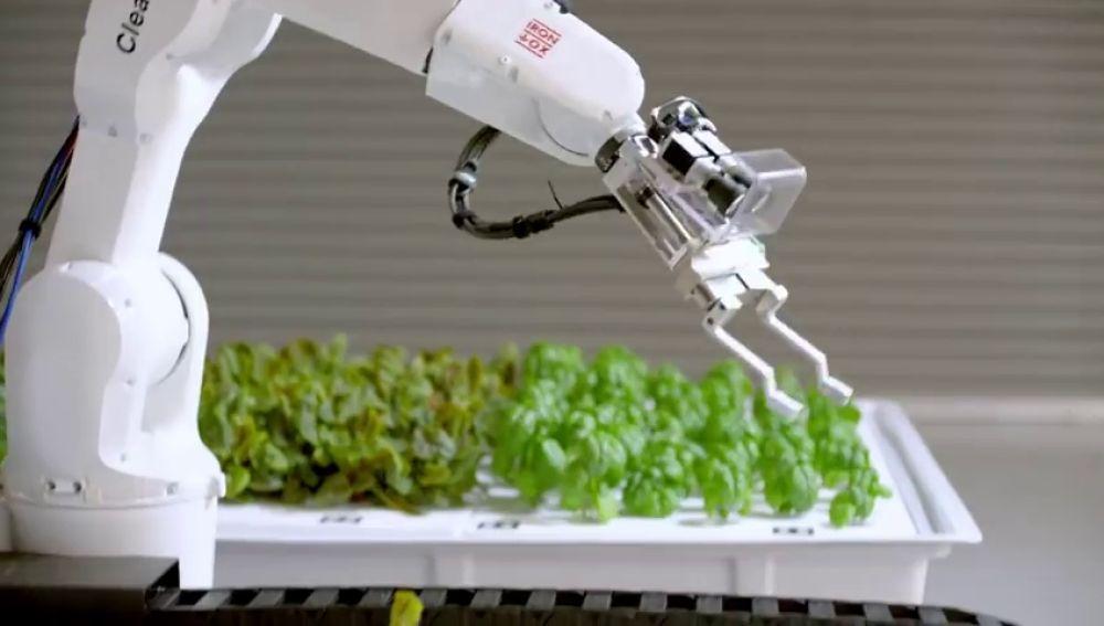 Primera granja de cultivo operada con inteligencia artificial