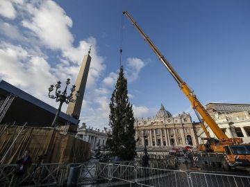 Árbol de Navidad en la Plaza de San Pedro del Vaticano