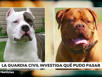 La principal hipótesis sobre el ataque mortal de varios perros a sus dueñas es que tenían fijación con ellas por tenerlos encerrados