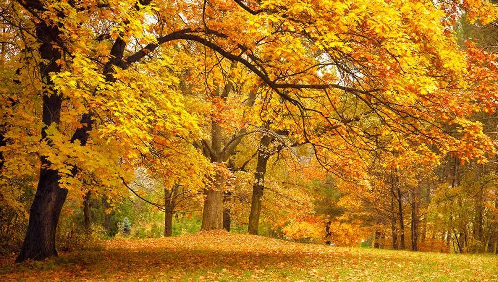 Feliz Octubre 10 Frases Para Dar La Bienvenida A Octubre De