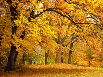 Hojas de los árboles en otoño