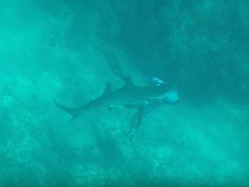 Un tiburón muerde la cabeza a un pescador